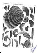 Bollettino della Società paleontologica italiana