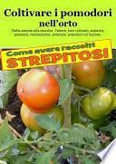 Coltivare i pomodori nell'orto. Come avere raccolti strepitosi