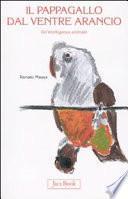 Il pappagallo dal ventre arancio