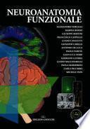 Neuroanatomia funzionale